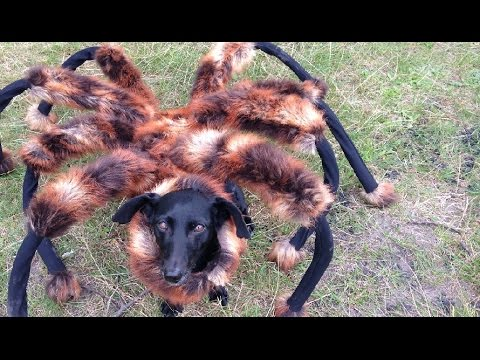 A Mutant Giant Spider #Dog Running To People Is One Of The Funniest Youtube #Prank