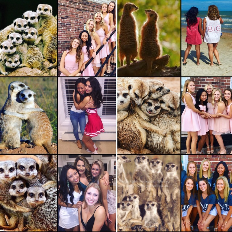 Ever noticed how sorority girls pose like meerkats in their photos?