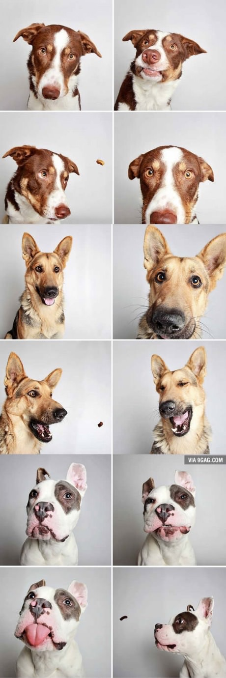 When you take dogs to the photobooth... #aww