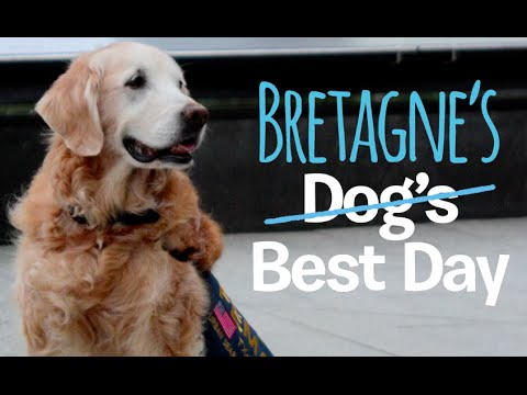 Bretagne, the last known 9/11 rescue dog, honored with best birthday ever