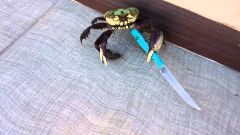 Don't mess with the knife-wielding crab!