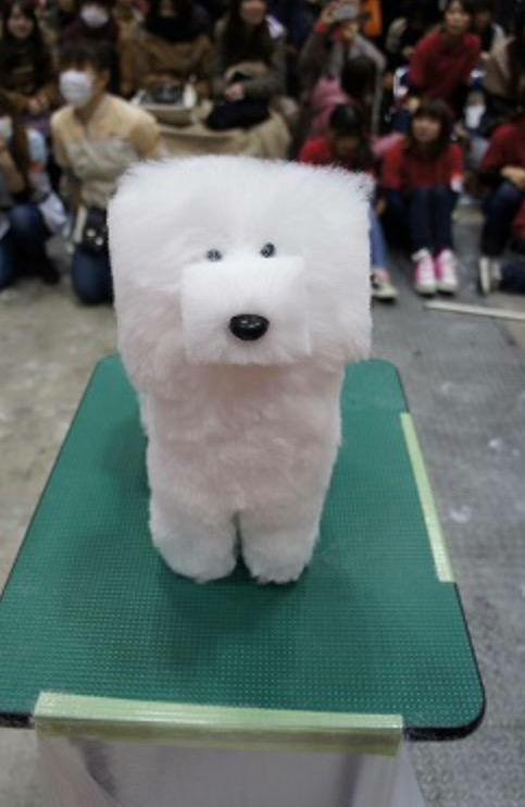 In Japan, dogs are groomed to shape of cubes... #LOL #WTF