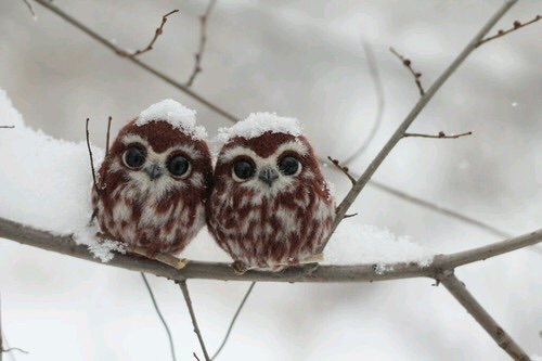 Just some happy owlets...