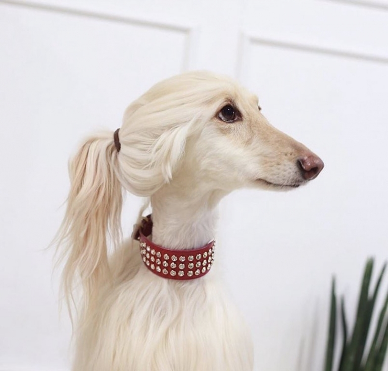 This beautiful #doggo is an influencer on Instagram