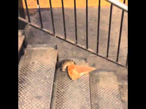 NYC rat taking pizza home on the subway