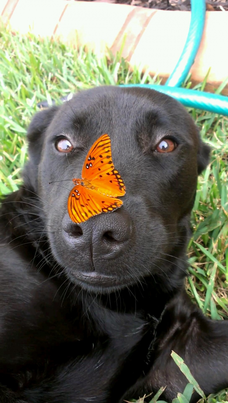 A dog with a butterfly on its nose