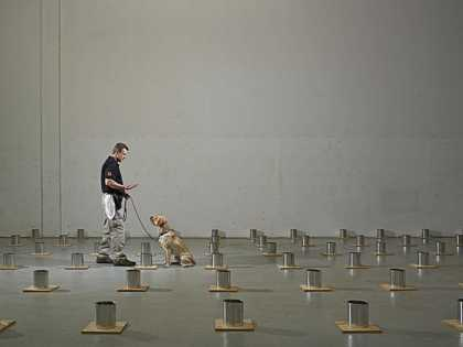 The Education of a Bomb Dog | #animals #dogs