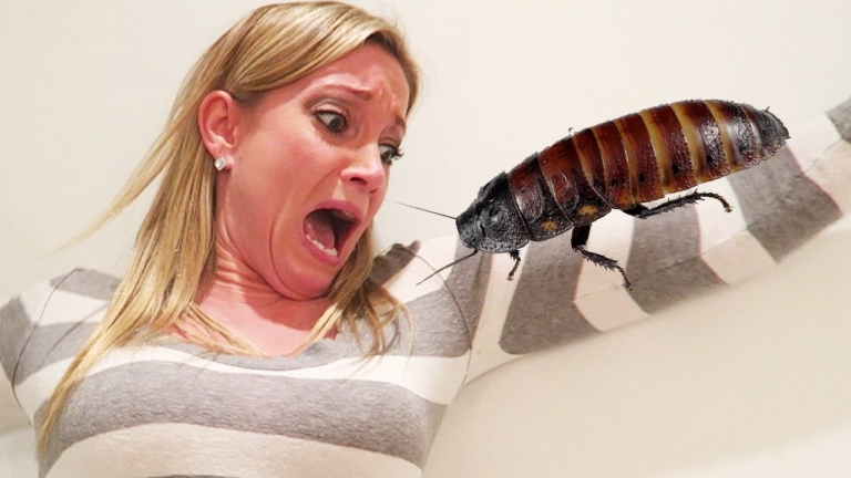 This Guy Locked His Girlfriend Inside The Bathroom With Cockroaches... Your Ears Will Bleed!