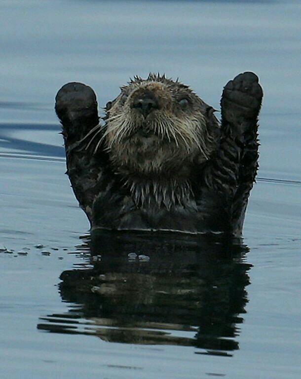 Just an otter raising its hands... must be a raccoon trying to rob it