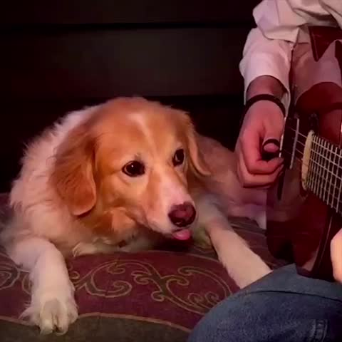 This Dog Is Sick Of His Human Playing Sam Smith's 'Stay With Me' On His Guitar