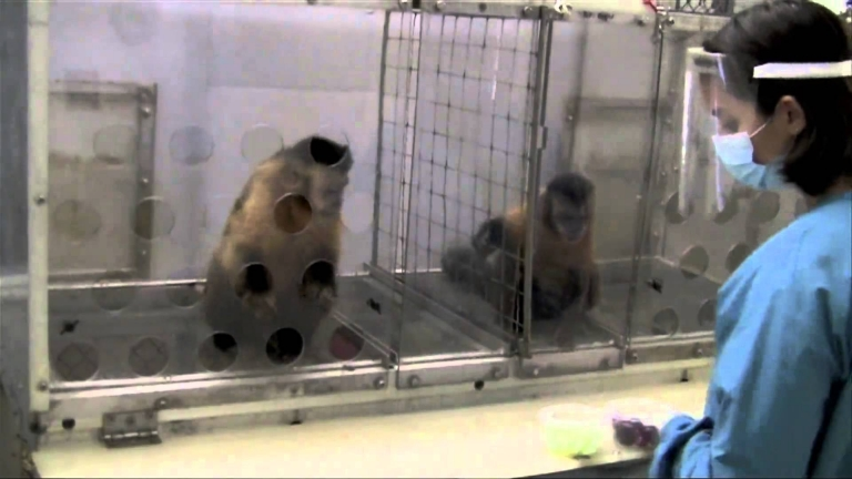 Monkeys, Like Humans, Will Protest If Paid Unequally