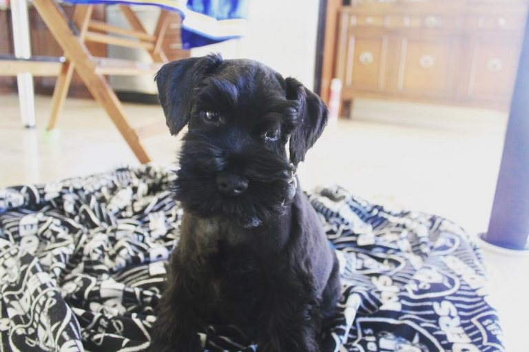 #Zendaya Gets a New Puppy After Losing Her Dog Midnight.... #Aww