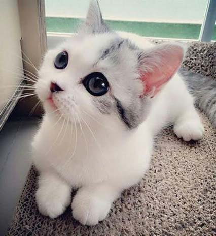 Is this the cutest kitten ever? You decide...
