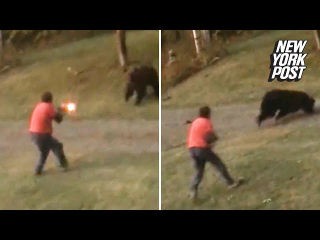 A Grizzly bear charged a man and took shotgun blast at point-blank range