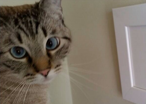 What do you think this #cat is thinking? Find out what's troubling this cat...