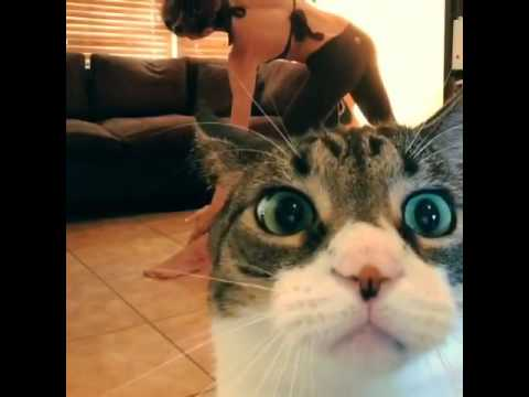 This #cat won't let its human do the #yoga video... see why!?