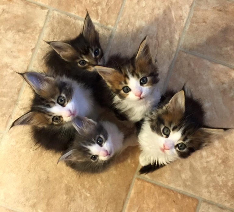 Bunch of cuteness