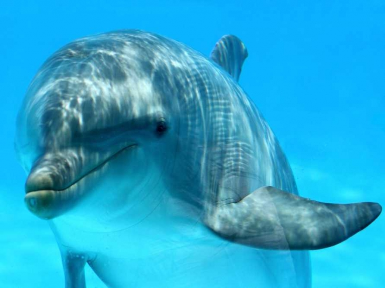 How #Dolphins See The World Compared To Humans