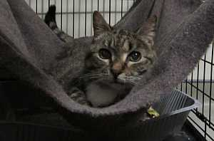 Hoarding case sees more than 50 cats removed from Halifax apartment #wtf