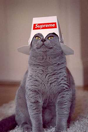 Cat Supreme #aww
