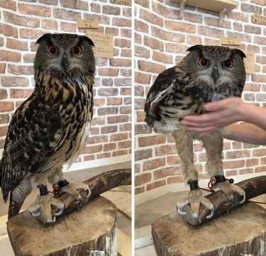 Did you know that owl have long legs? Now you know. 🤔