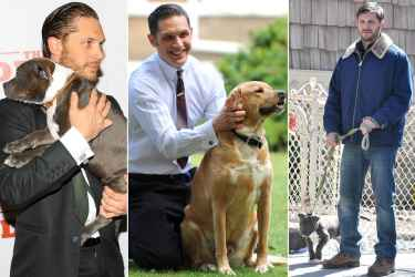 Did you know Tom Hardy love dogs!!??
