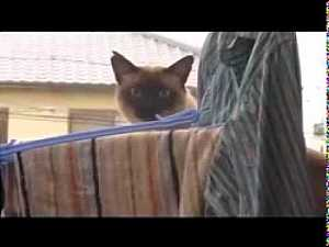 Cat Jump Fail #Funny_Animals