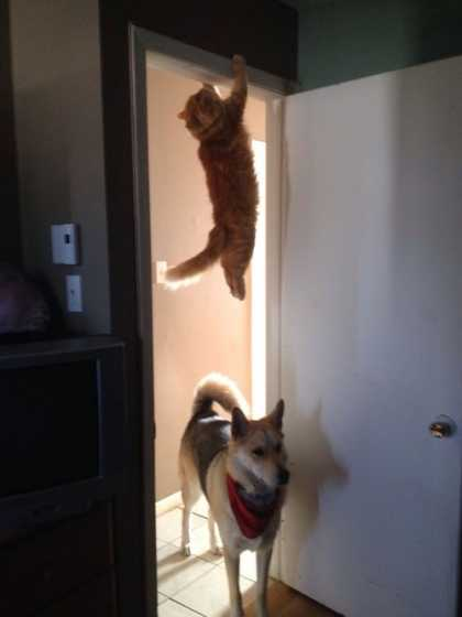 #Funny: Where did that cat go?