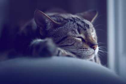 Why Some People Respond to #Stress by Falling Asleep