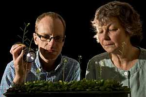 #Science: Plants do sums to get through the night, researchers show   #biology