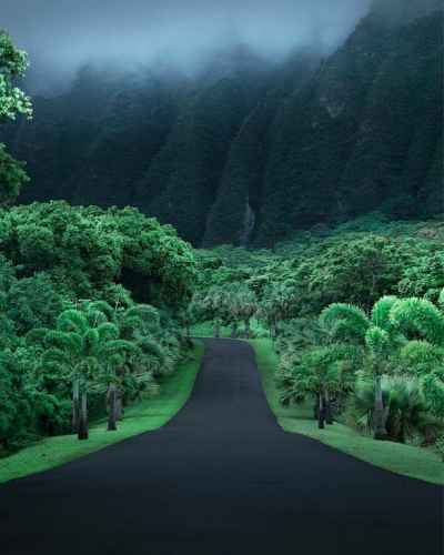 Road Along Ho'omaluhia Botanical Garden in Oahu, #Hawaii