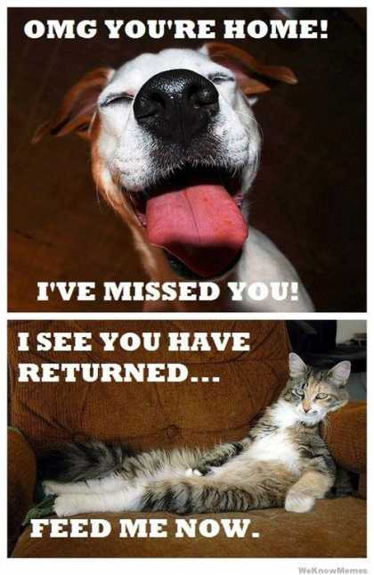 #Dogs vs #Cats