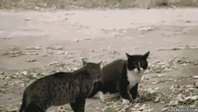 "#Funny: #Cats were fighting and then the dog came and said, ""Woof!"""