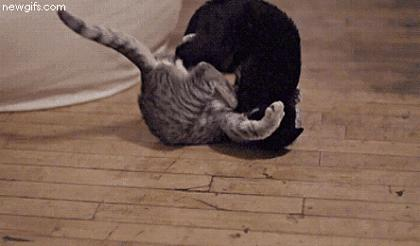 Cat fight scene from the new movie directed by Quentin Tarantino | #funny #cats