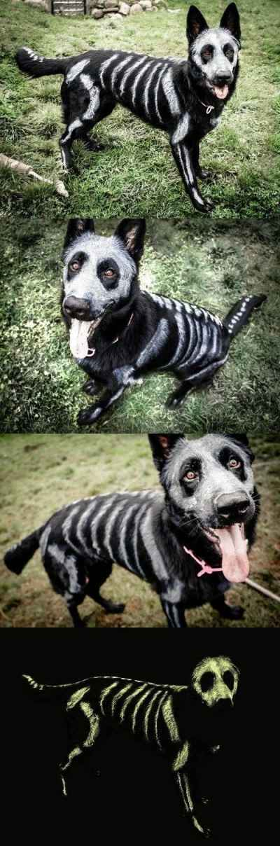 Dog #Halloween Skeleton Makeup 🎃