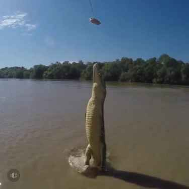 Watch is this croc jumps vertically out of a river!