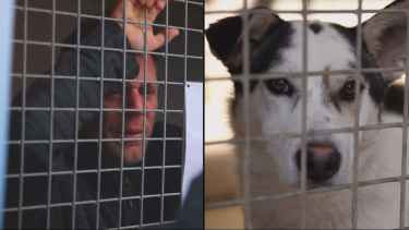 YouTube prankster Rémi Gaillard locked in cage, raises €200,000 for the animal shelter