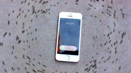 Strange Phenomenon: Ants Circled An iPhone When It Rings