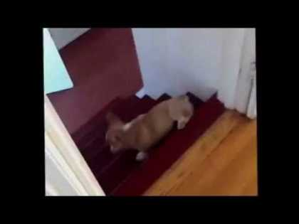 Dog does a barrel roll | #funny #dogs