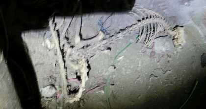 #Weird: Monster Skeleton Discovered By Cable Installer In A Basement