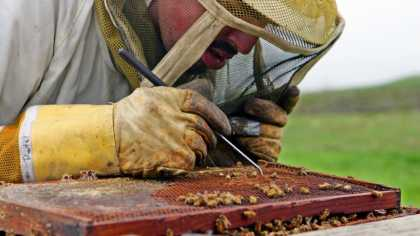 #Science: What's killing the bees? Scientists discovered.