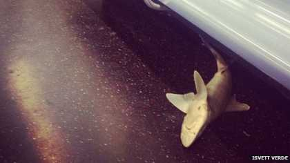 #SharkWeek: Shark found on New York subway