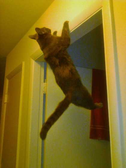 Cat is doing the chin up... #aww