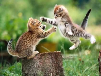 I thought cat fight was always nasty but this one is really cute #aww