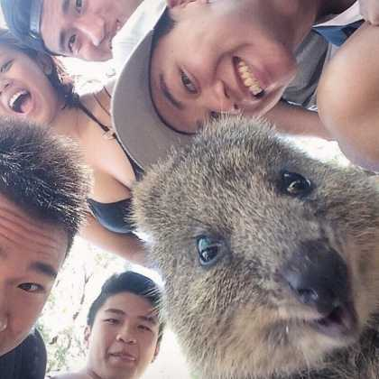 Selfies with Quokka