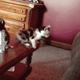 Cat needs more training #funny #gif