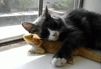 Who said cat and bearded dragon don't make a cute couple? #aww
