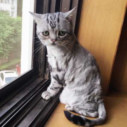 This cat must be the saddest cat on Instagram...