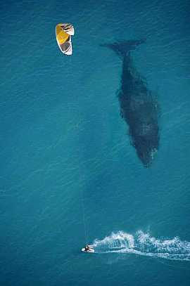 Beautiful whale and man photo! #pics
