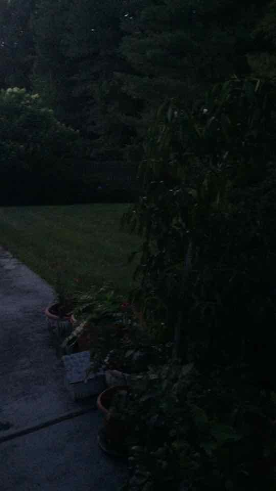 Hunting for #fireflies
